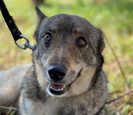 Hunde - WOLFINKA - kinderlieb möchte ihr Zuhause