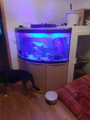 Meerwasser Aquarium mit besatz und