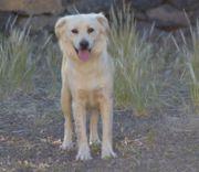 Mimosa - hübsche Hündin - Mischling Tierschutzhund
