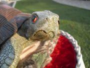große Schildkröte sitzt auf Marmor