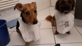 Hunde - Terrier und Pinscher Mix suchen