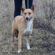 Rusty tolle aktive Hundedame ca