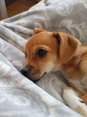 Kleinbleibendes Hundemädchen