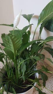 2 Pflanzen mit Topf
