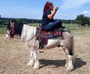 Gelände -Freizeitpferde auch für Weiterverkäufer