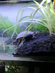 Komplettes Aquarium Wasserschildkröte und Zubehör