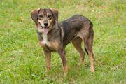 Selma 5 Jahre - Mischling - Tierhilfe