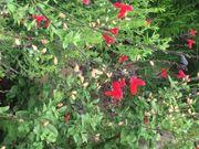 Garten in Bad Vilbel gesucht
