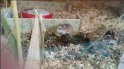 Informationen zur Artgerechten Hamster Haltung