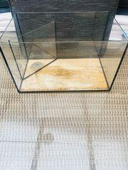 Glas-Aquarium