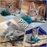 Baby Kater Kitten Piet geimpft