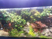 Aquarienpflanzen abzugeben