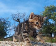 Junge Katzen Kitten