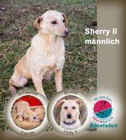 Sherry - Die kleine Sherry-Kunde lieb