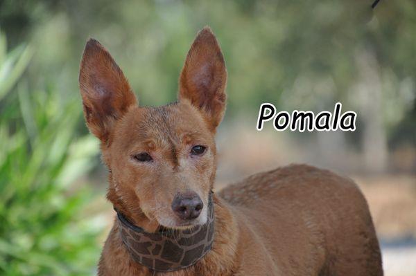Darf Pomala bei Ihnen ihr Lebensabend genießen? ? ?