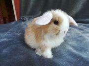 Kaninchen Babys ab sofort zu