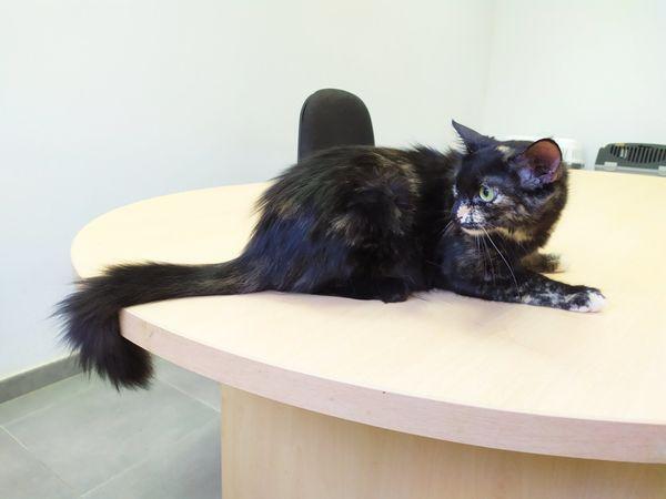 Mary Fur Immer Zuhause Gesucht In Koln Katzen Kaufen Und