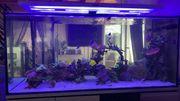 Meerwasser Aquarium Auflösung 1200L