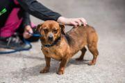 Tierschutzhund Mel sucht ihre Menschen