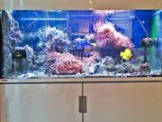 Meerwasser Salzwasser Aquarium 450L