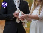 weiße Hochzeitstauben Tauben Genehmigung 11