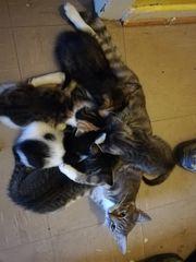 Kitten MIX