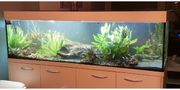 Aquarium 450 Liter mit Technik