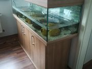 Aquarium 330 L Eheim Vivaline