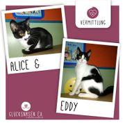 Kätzchenduo Alice und Eddy wünschen