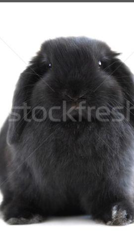 Tierschutzvereine, -heime - Sie geben Kaninchen zur Adoption