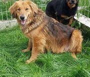Jo - Merlin wunderschöner Hundebub sucht