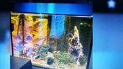 Aquarium 475Liter