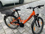 Pegasus Avanti Fahrrad 24