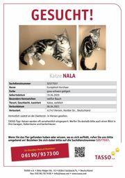 Katze Nala vermisst 100EUR Finderlohn
