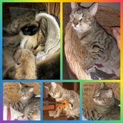 Katze Trixie kastriert geimpft gechipt