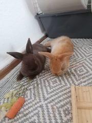 kaninchen dringend abzugeben