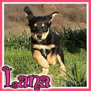 Lana sucht ihre Familie