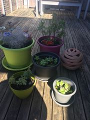 Blumentöpfe Kunststoff