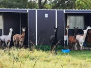 Fahrbare Weidehütte Außenbox von Hippo-Tech