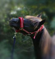Reitbeteiligungen Pferd sucht Reiter