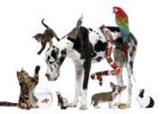 Tiersitter-Hundesitter-Katzensitter-Kleintiersitter usw