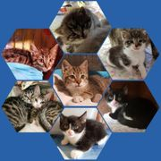 Katzenanimateure gesucht