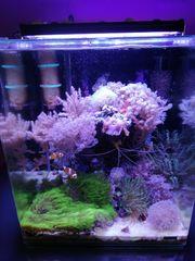 60 lit Meerwasser Aquarium