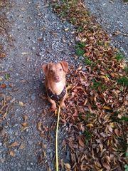 Liebevolle Hundebetreuung Hundesitter Tierbetreuung