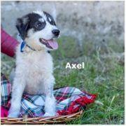 Axel sucht seine Familie