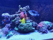 Aquarium Auflösung Meerwasser Fische LG