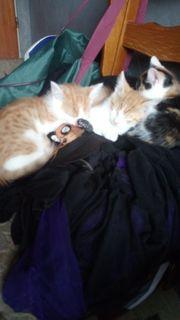 Katzen Jungs in liebevolle Hände