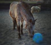 Biete Reitbeteiligung auf liebem Pony