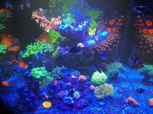 Korallen Ableger SPS LPS Zoa