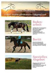 Mobiler Pferdeservice